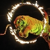 Цирки в Дудоровском