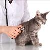 Ветеринарные клиники в Дудоровском